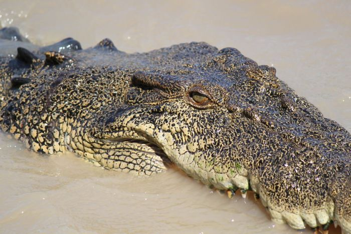 Drone to police the beaches in Queensland after crocodile attacks 2