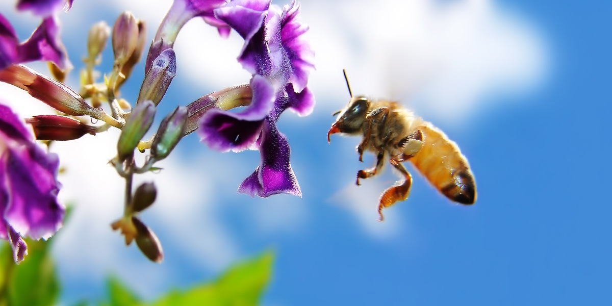 Walmart is looking to patent robotic drone bees