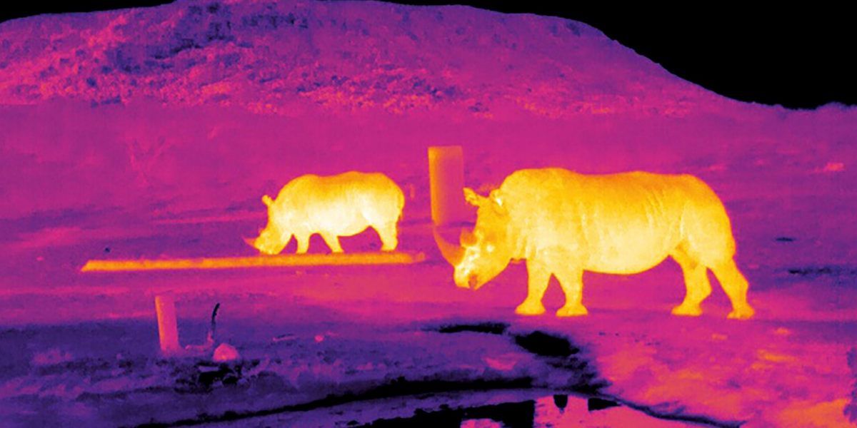 An ecologist and astronomer develop a new way to count endangered species