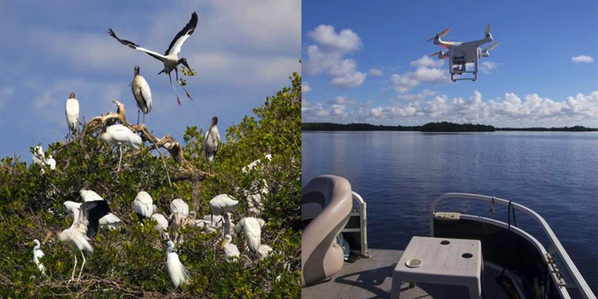 Drone used to study rookery on little Lenore Island, on the Caloosahatchee River in Florida.