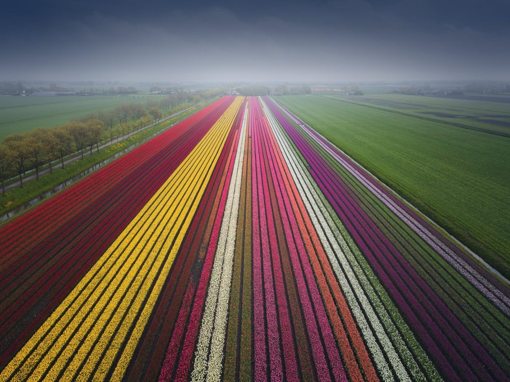 dutch landscape photographer captures tulips from the sky and