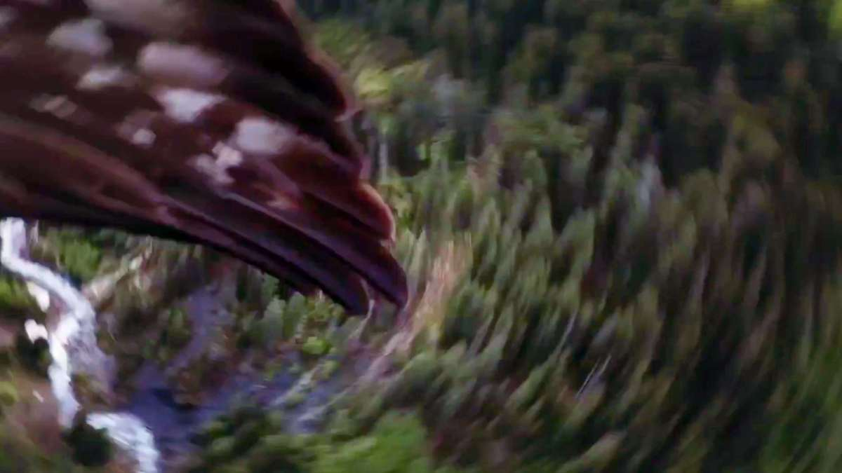 Eagle grabs drone mid-flight in the Swiss Alps! [video]