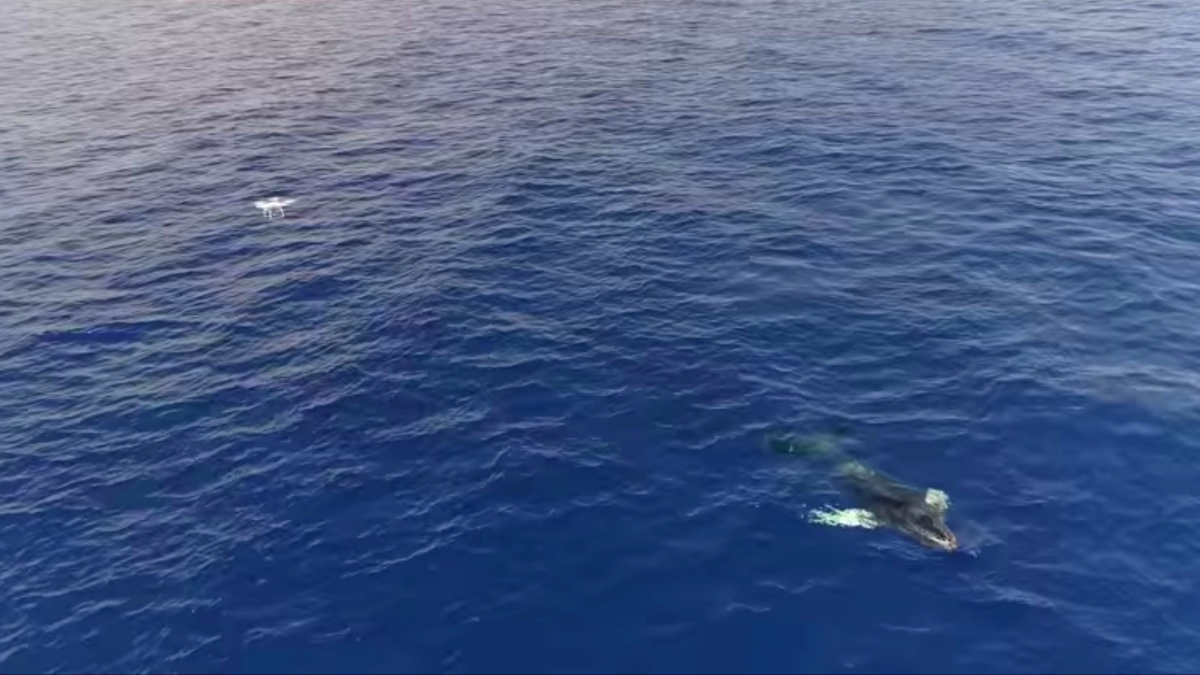 Drones are a valuable tool in freeing whales from lines and fishing nets