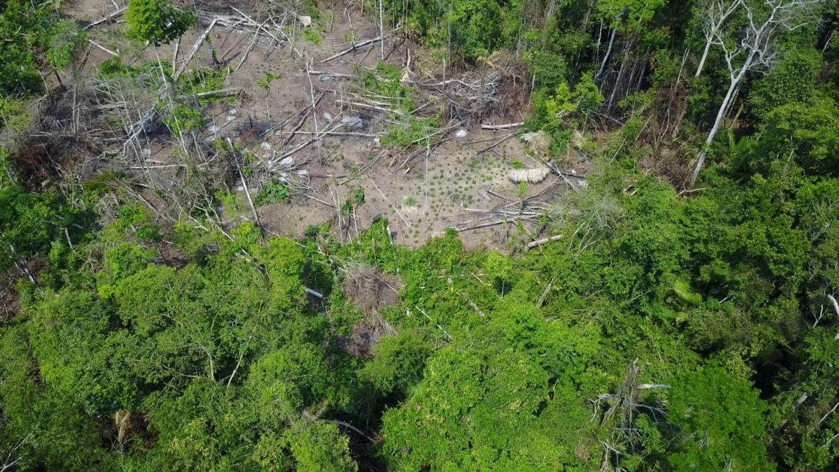 Brazilian government dept. Funai releases drone footage of isolated tribe