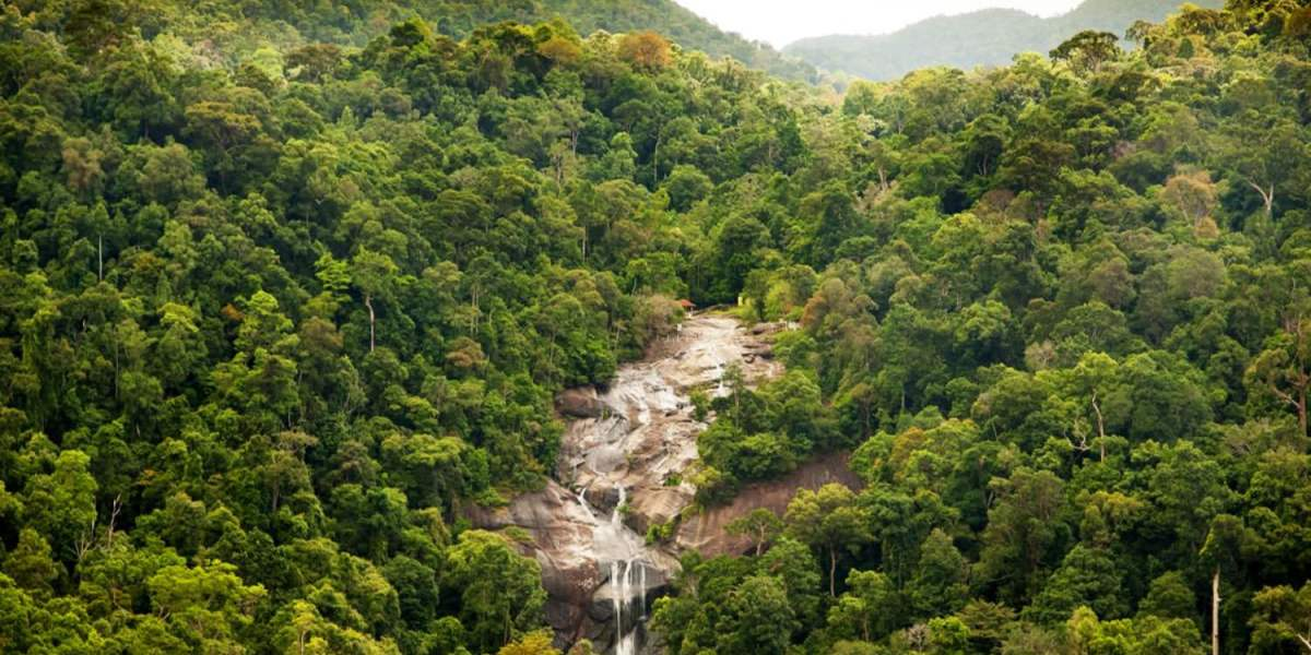 Drone helps find a missing woman in Malaysian jungle