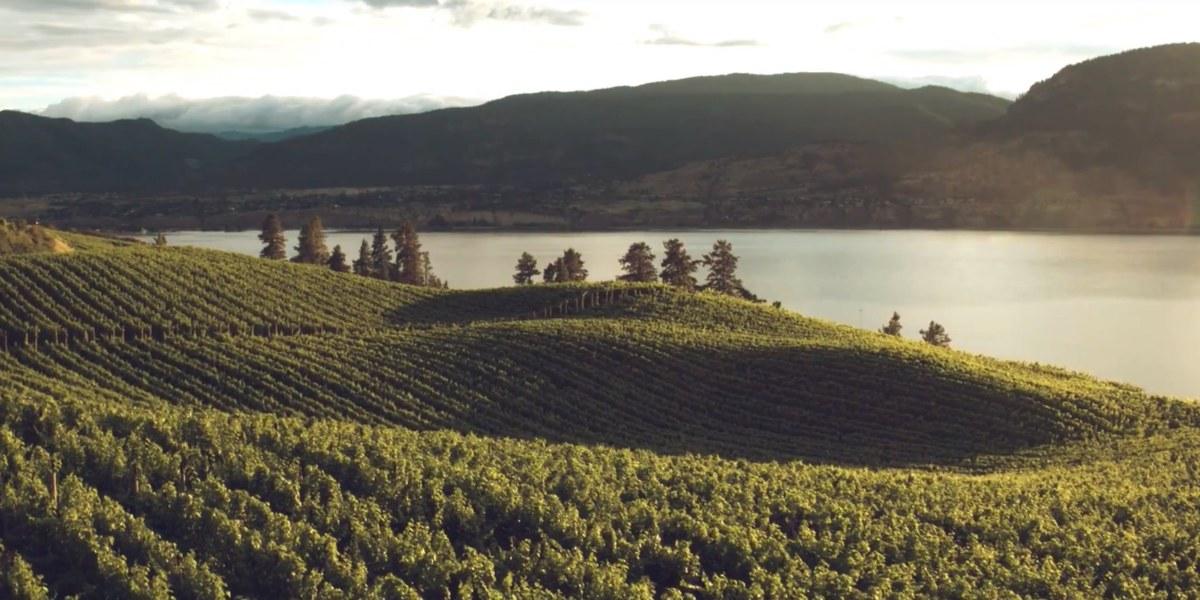 DroneRise - DJI Spark and iPhone 8 Plus used to create cinematic video of Okanagan vineyards