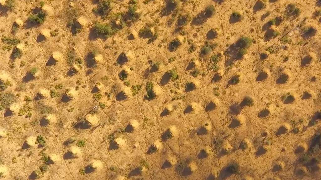 200 million termite mounds cover an area the size of Britain