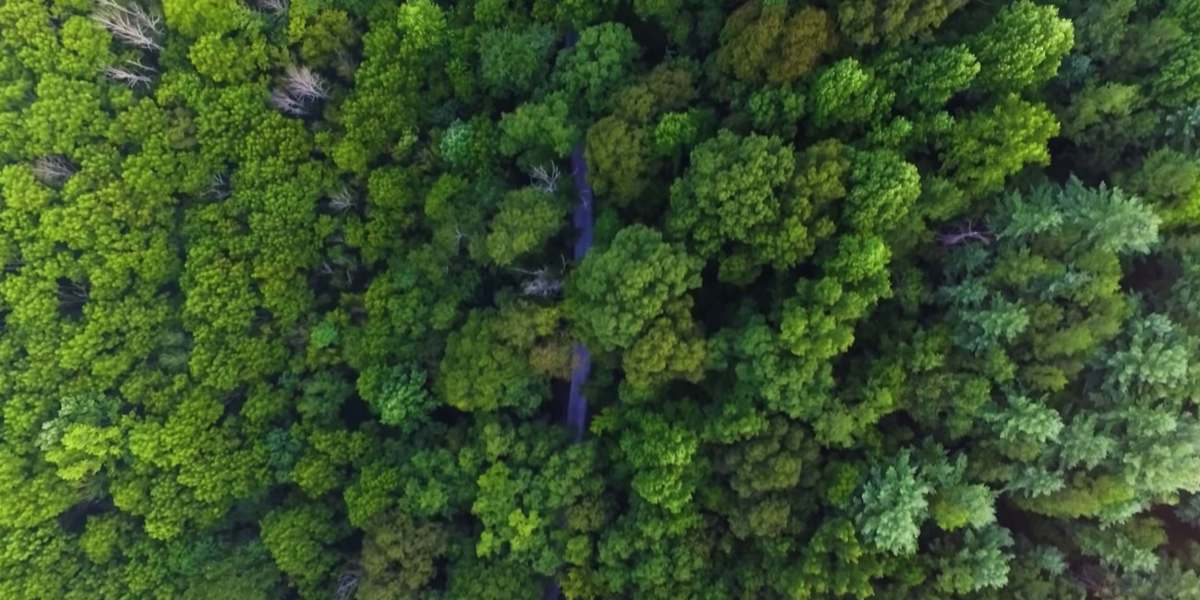 Fleets of drones may come to the rescue of lost hikers