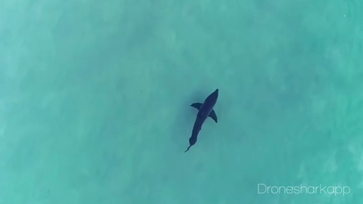Sold everything to built a shark-spotting app Drone Shark