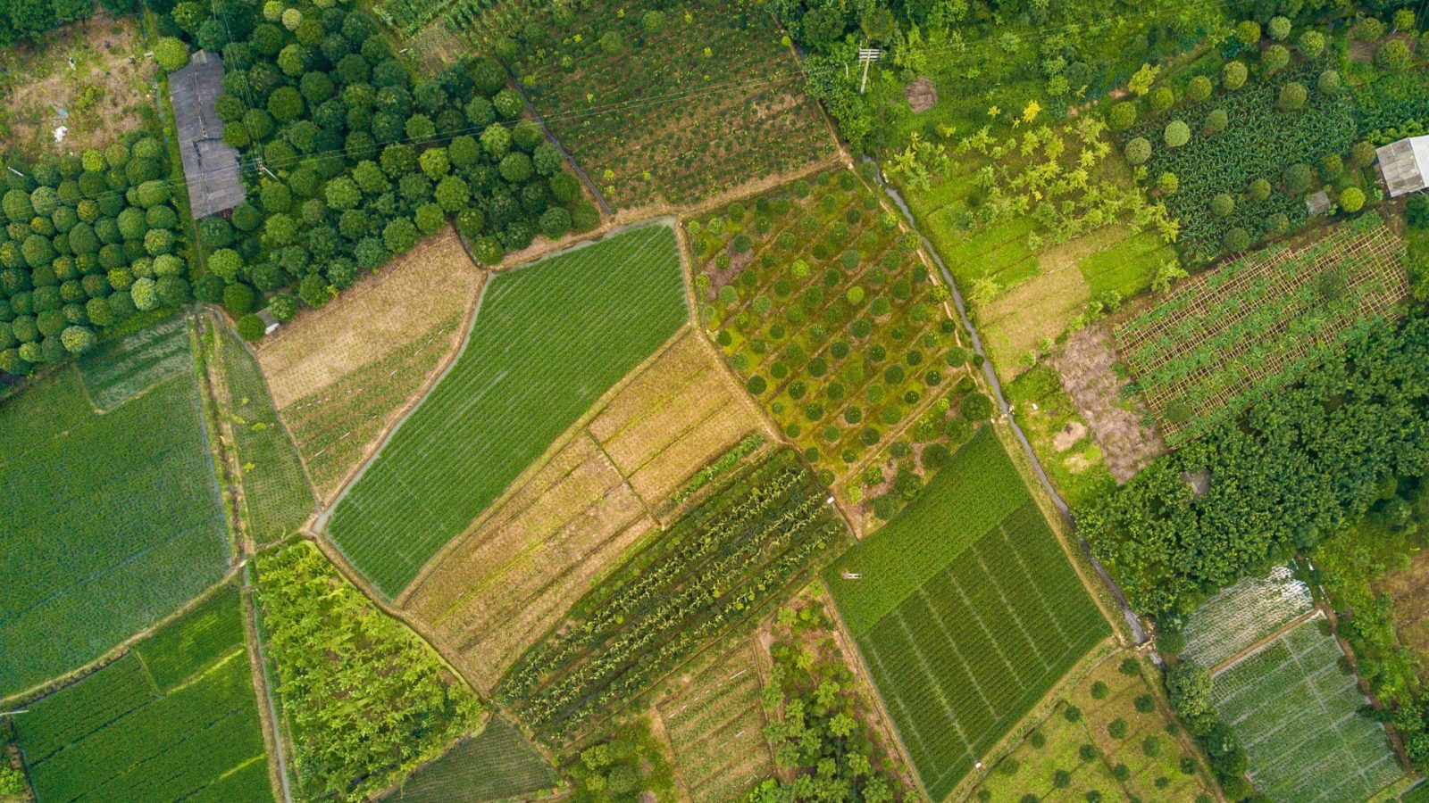 Over 400 DJI drones in world's largest agricultural drone ...