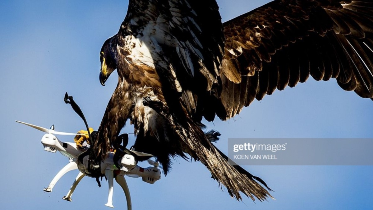 Drone-catching eagle photo goes viral