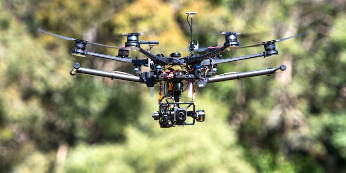 Koala-spotting drones outperform human experts