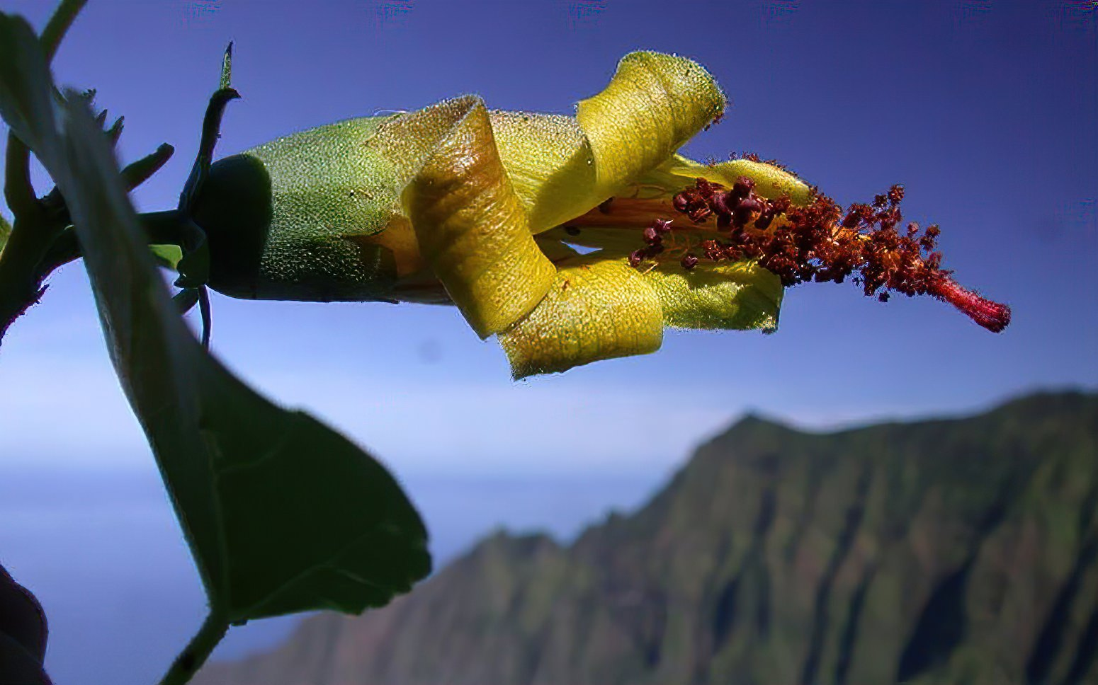 Researchers equipped with drone tech rediscover extinct flower