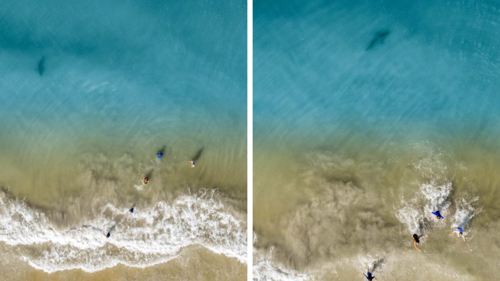 shark-approaching-his-family.jpg