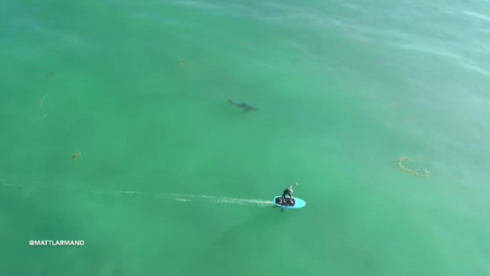 Shark-Surfer-Foil-Drone.jpg