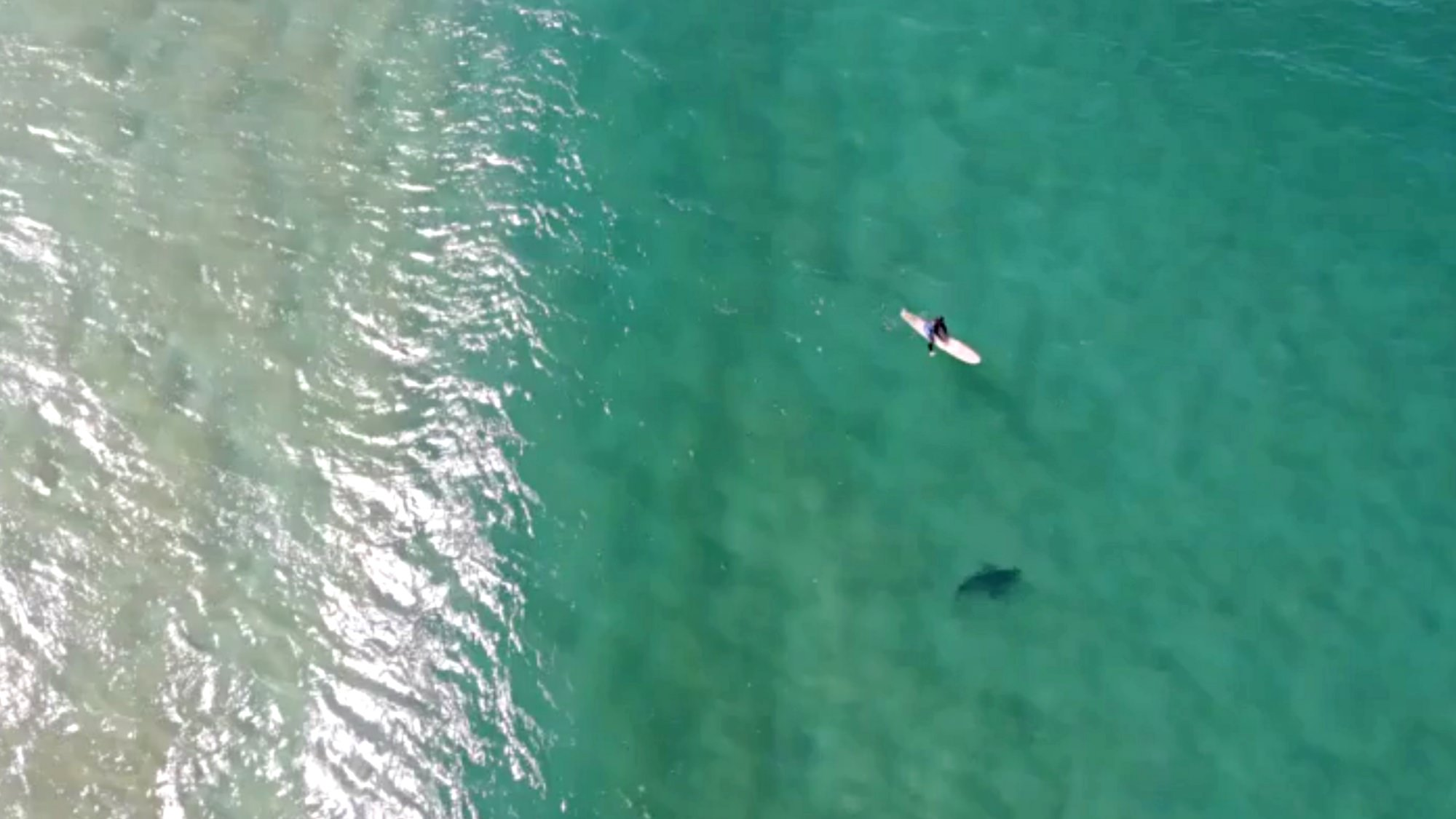 Drone pilot uses Mavic 2 Enterprise to warn surfer of approaching shark