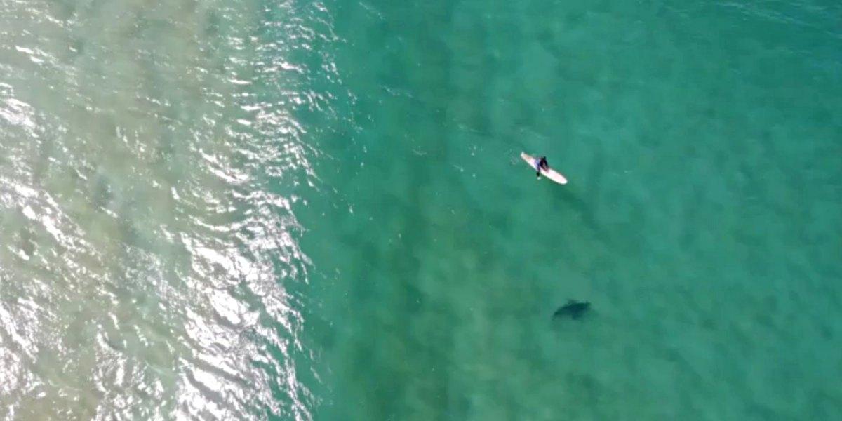 Drone pilot uses Mavic 2 Enterprise to warn surfer of approaching shark