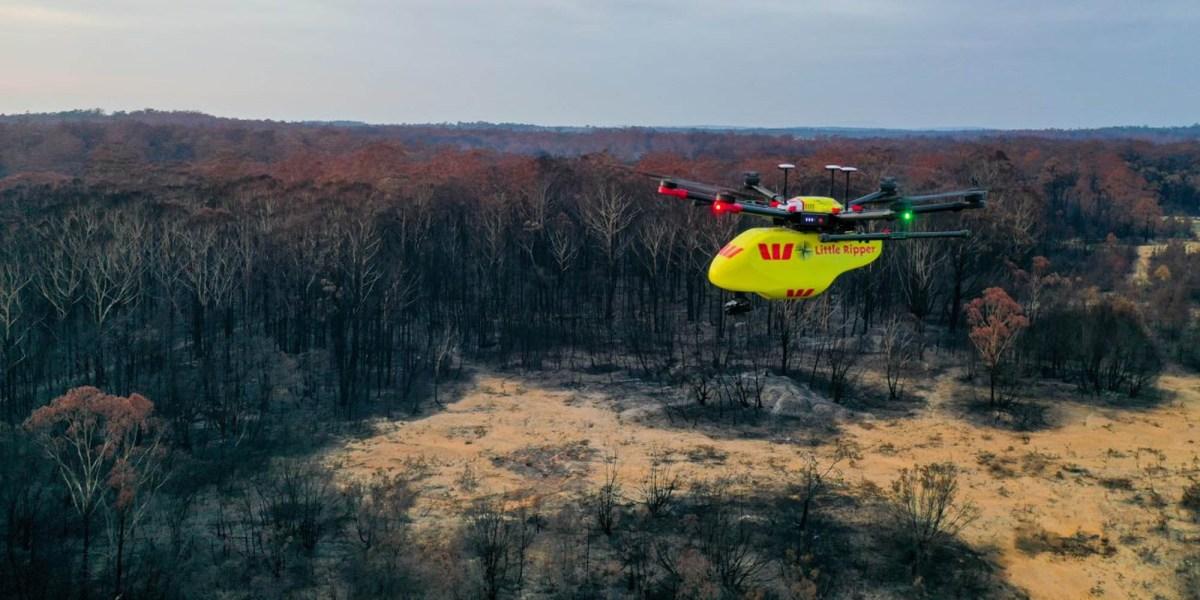 drones Australian bushfires wildlife