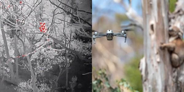 drones facial recognition koala