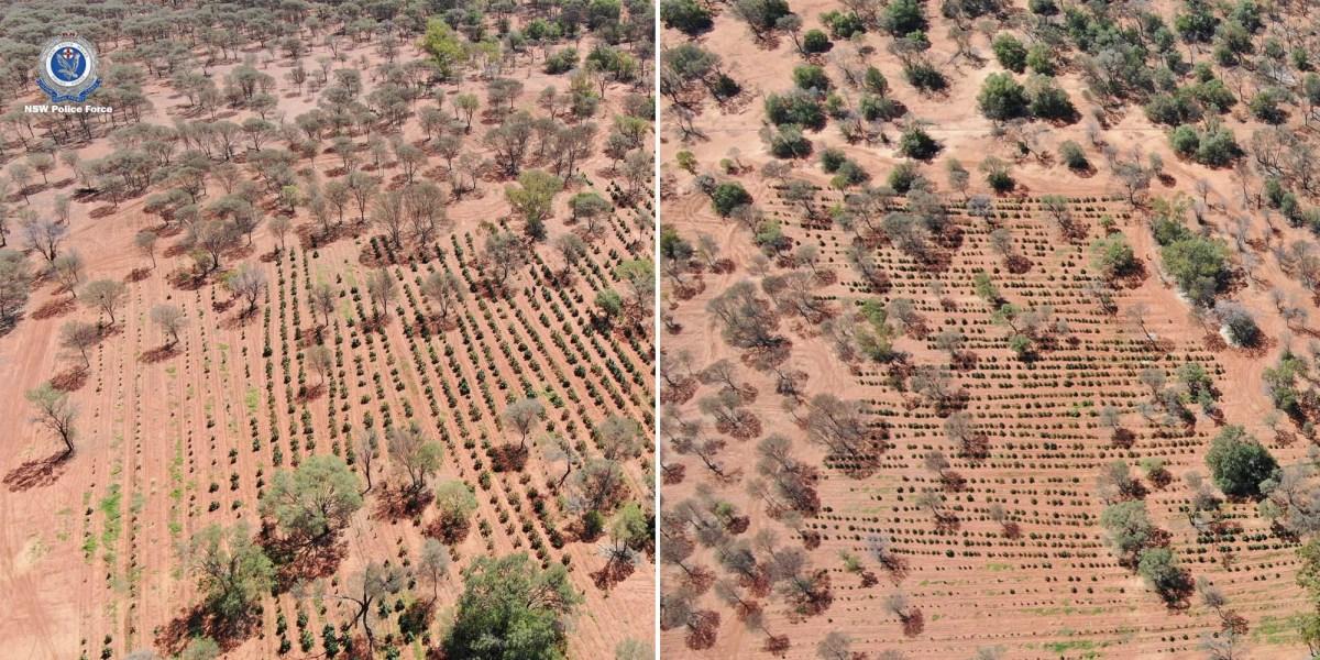 Drone cannabis seized Australia