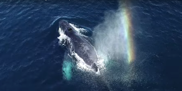 drone whale stress