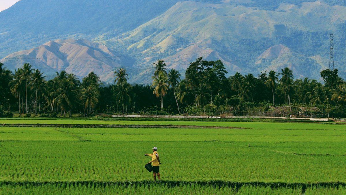 Rice planting drone