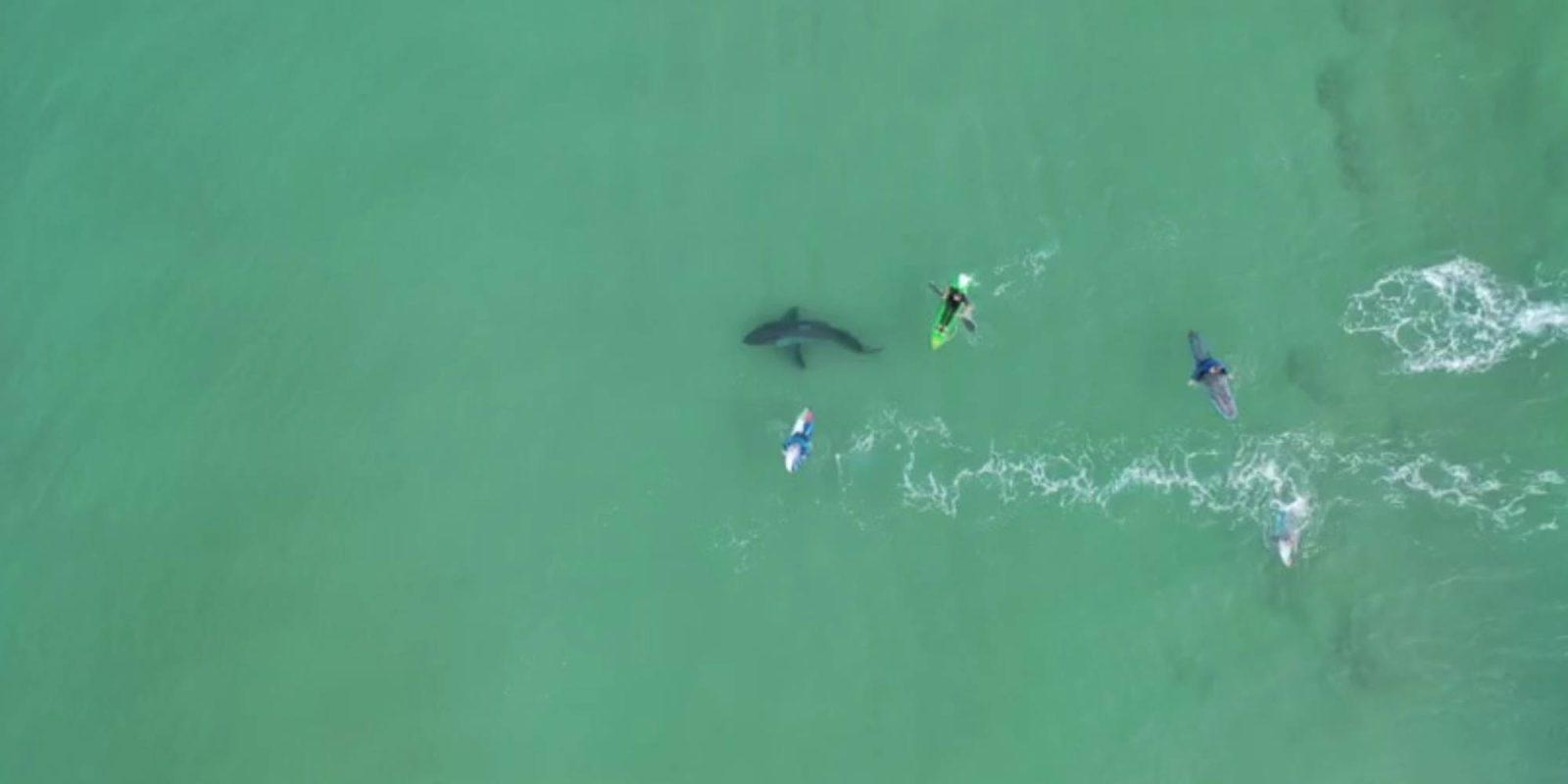 Image result for sharks near beach swim florida