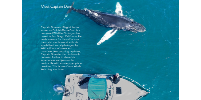Capture d'écran de l'observation des baleines