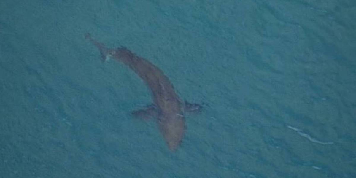 drone hunts killer shark