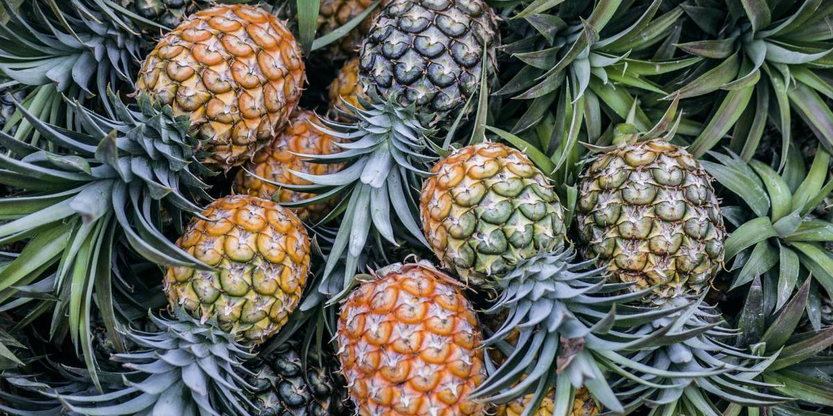 Researchers pineapple drone frames