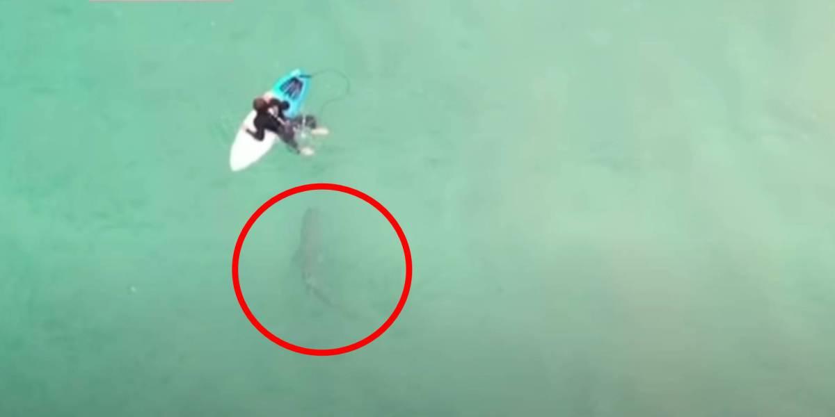 Drone surfer shark