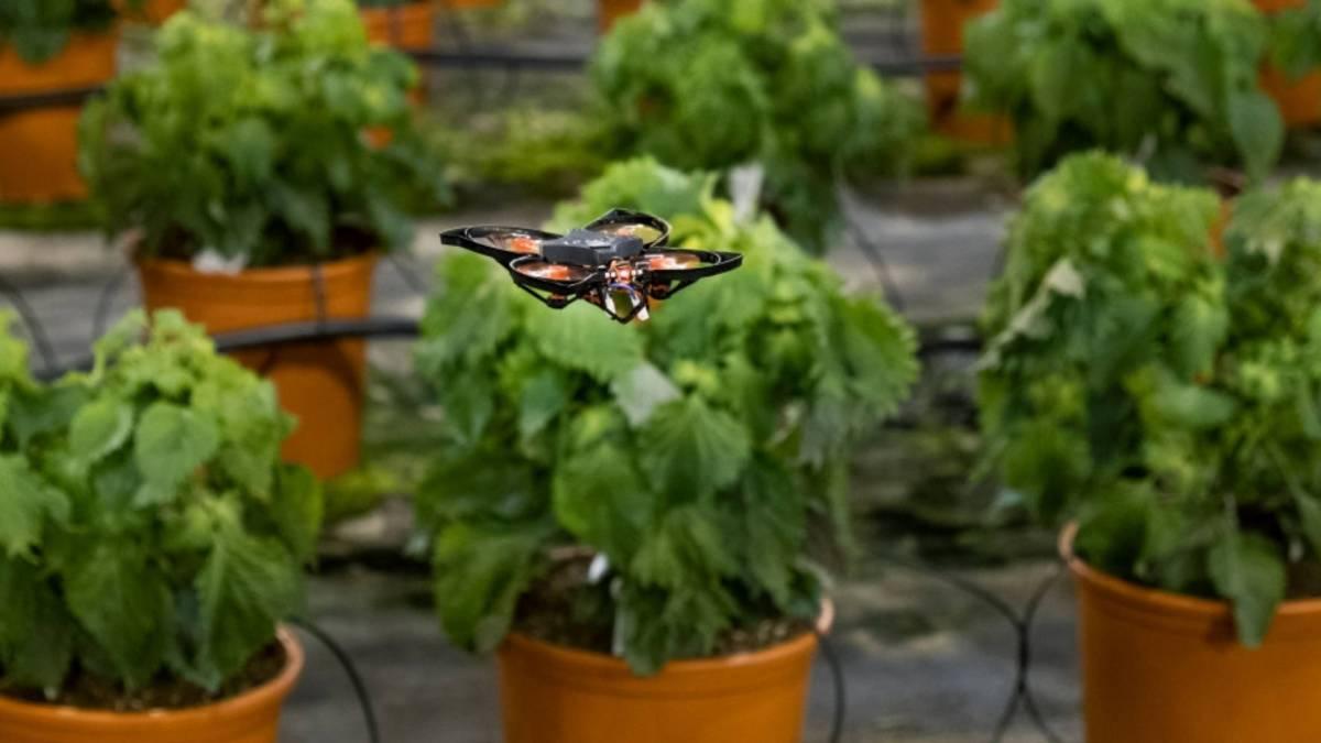 Drones crops moths
