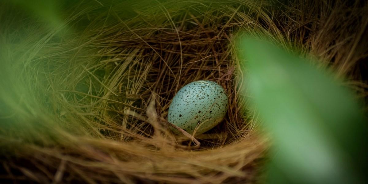 bird egg oiling drone