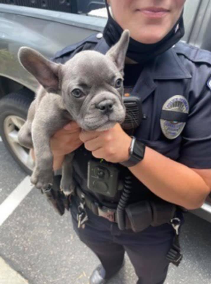 police drone dog kidnap