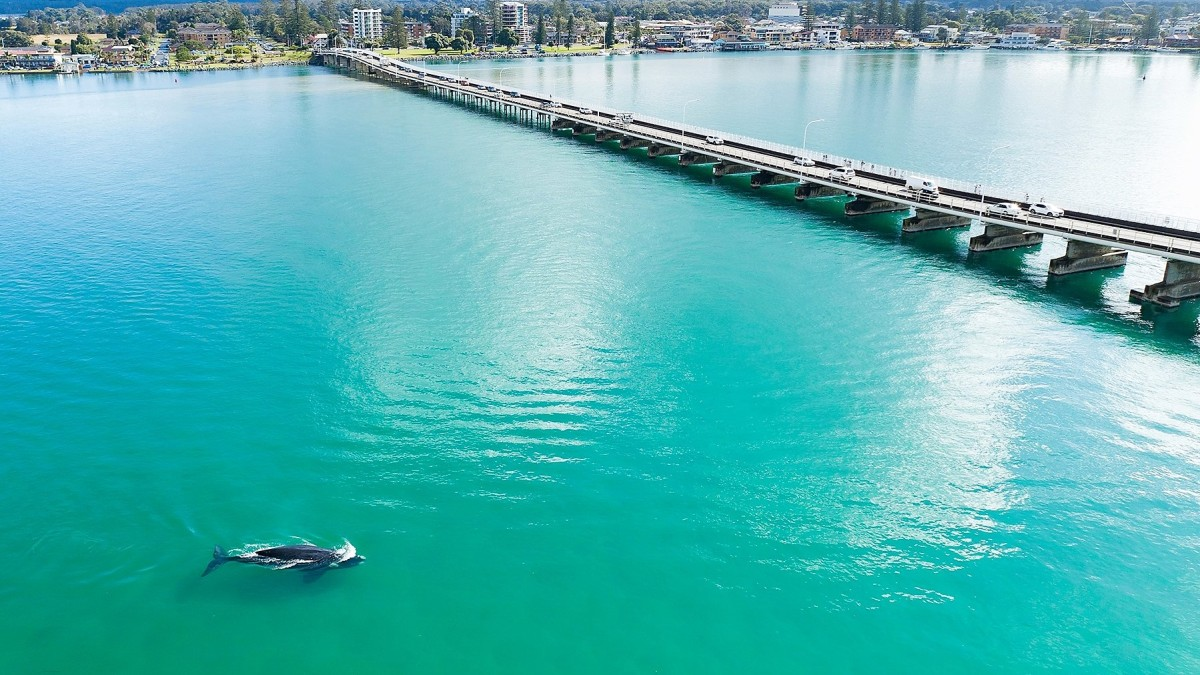 australia lake whale