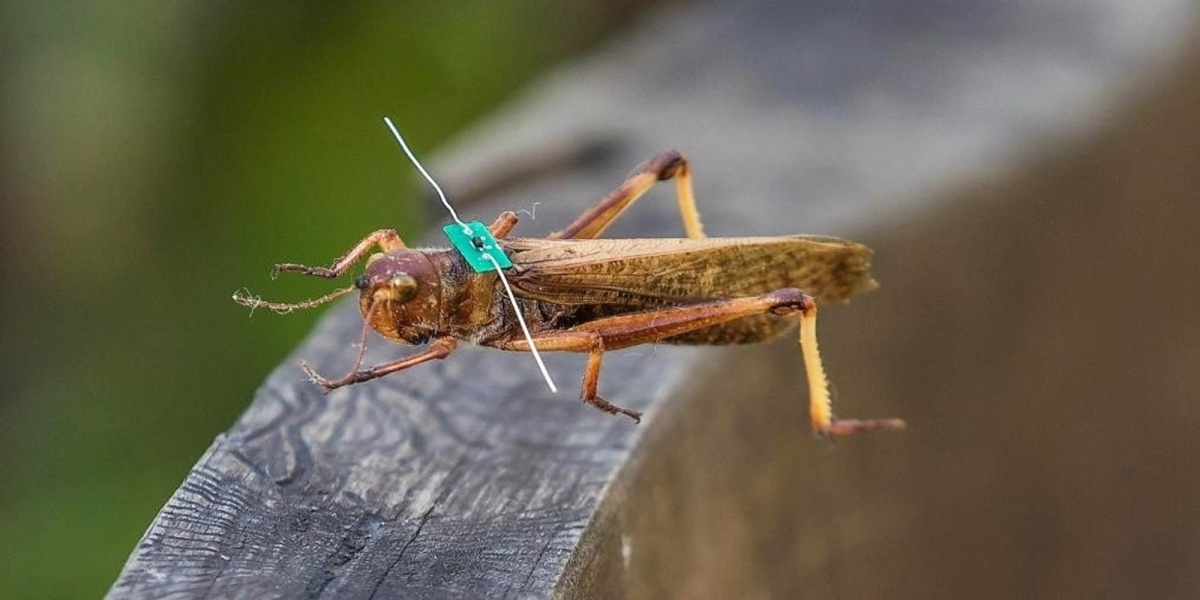 insect tracking drone