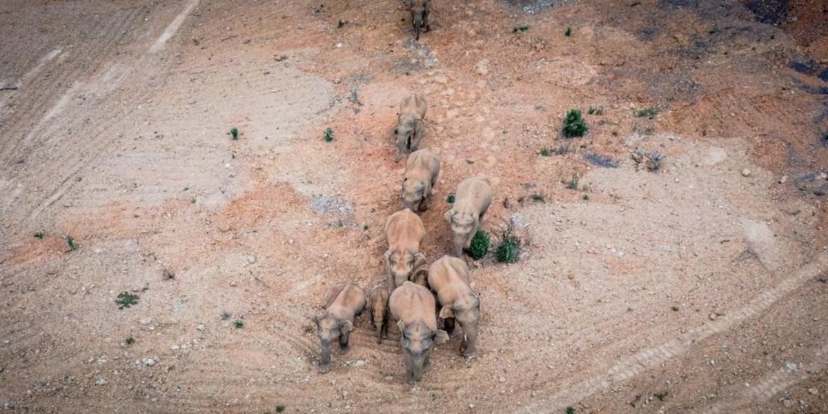 china wild elephants