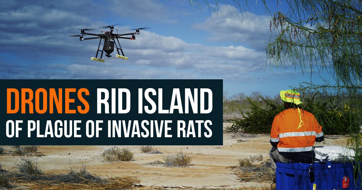 drones eradication invasive rats