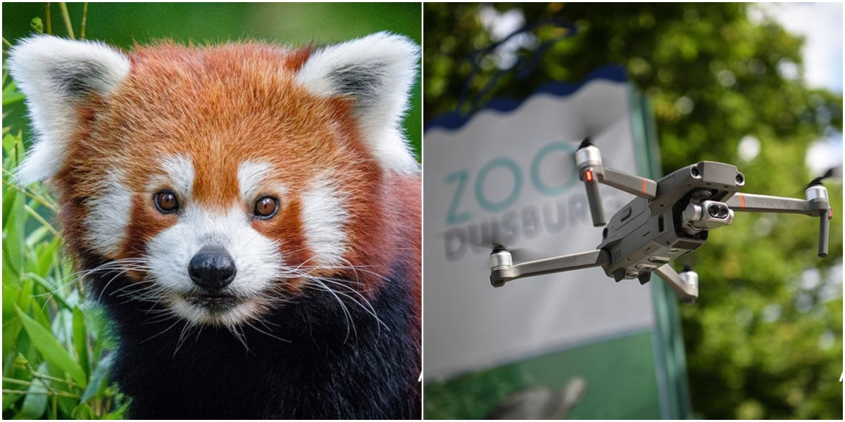 red panda thermal drone