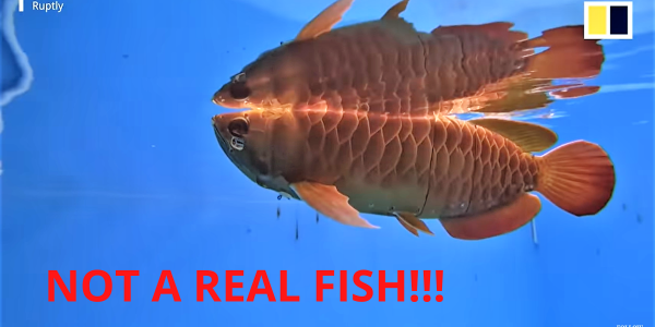 arowana underwater drone
