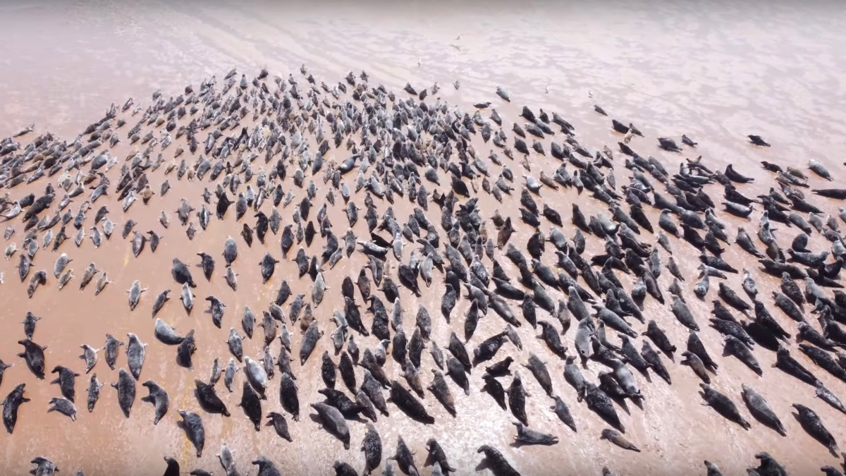 animal harassment drones