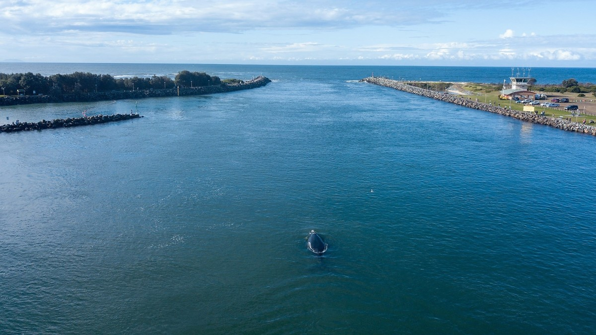 drone whale monitoring