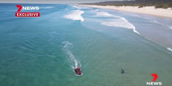 drone footage shark attack