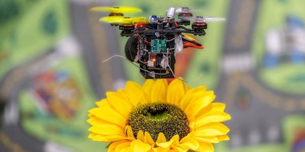 pollination drones bees