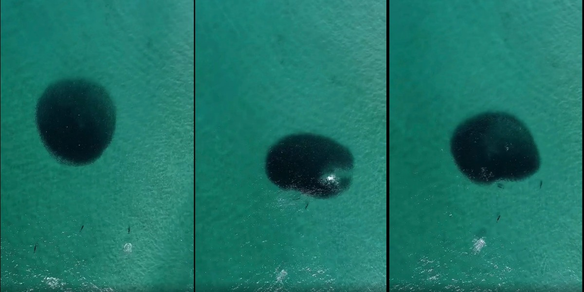 drone video dolphins