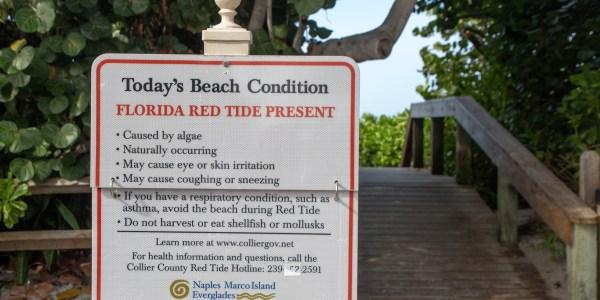 florida red tide drones