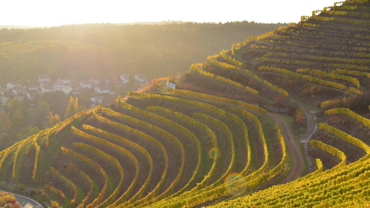 drones grapes vineyards