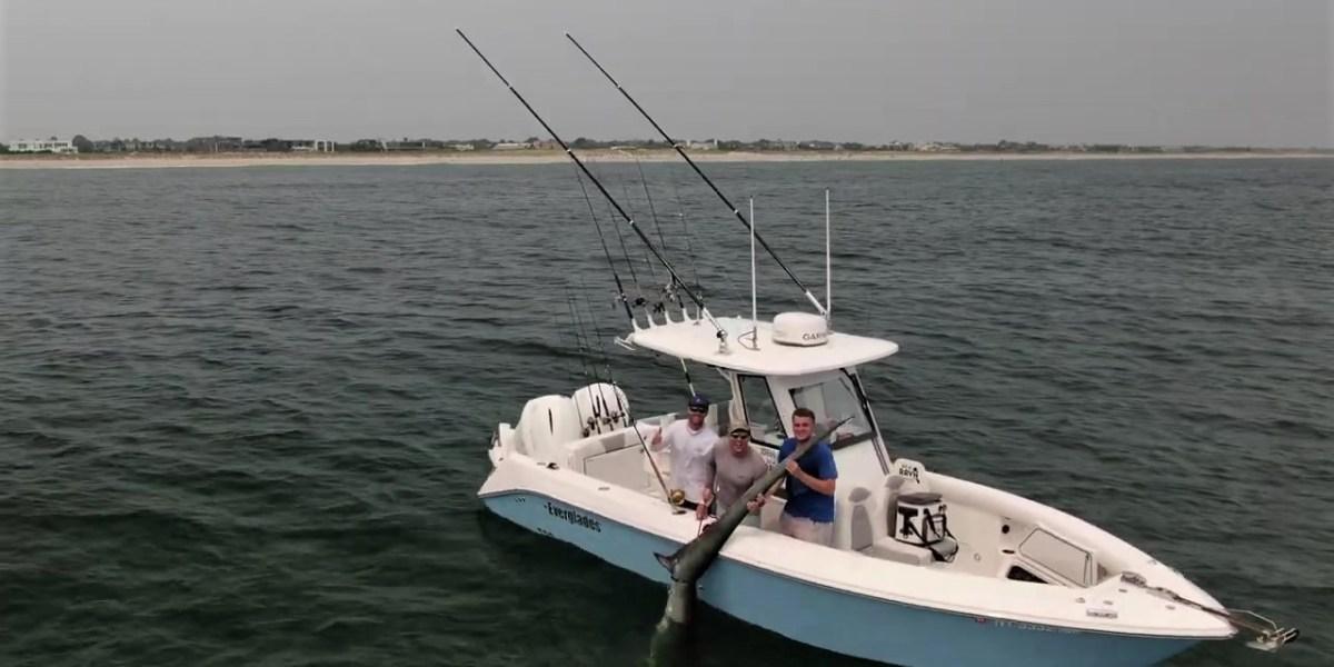 New york shark video