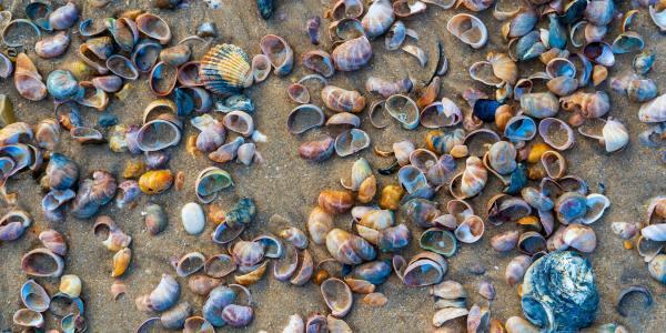 drone illegal shellfish