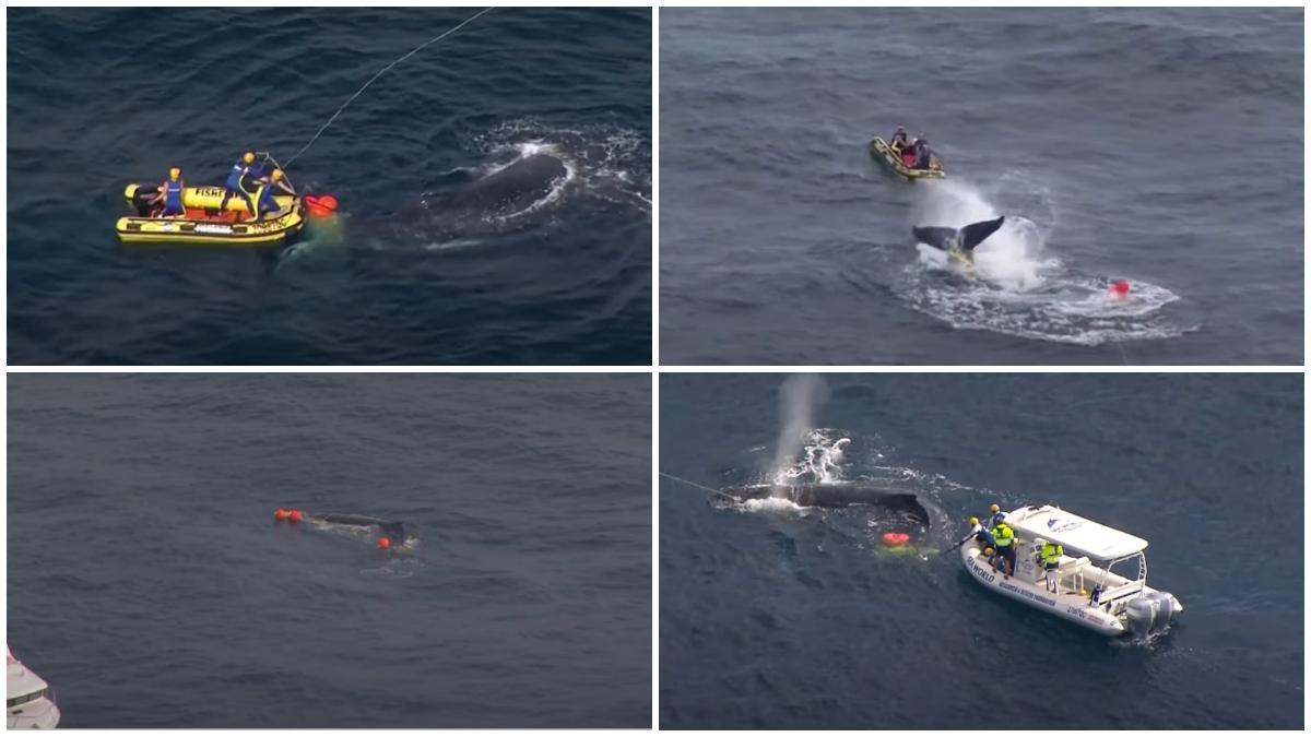 australia whale shark net